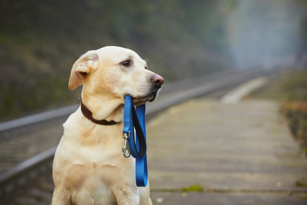 «Яндекс» поможет найти потерявшихся домашних животных